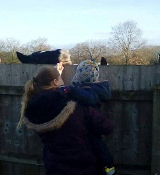 Little Owls Nursery Norfolk Feeding The Horses (1)