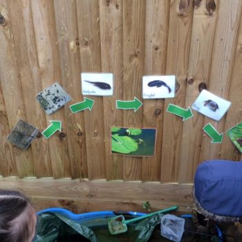 Our Nature Garden Pond At Little Owls Day Nursery Norfolk (1)