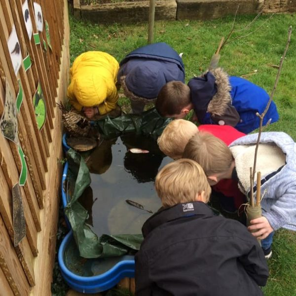 Tadpoles At Little Owls Day Nusery Norfolk (2)