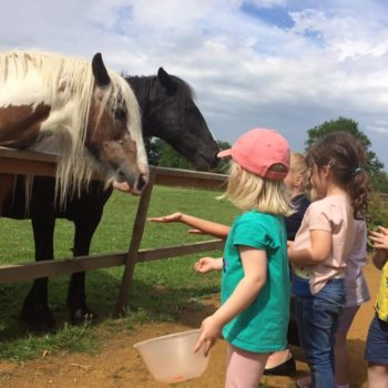 A Visit To The Horses At Little Owls Scarning (3)