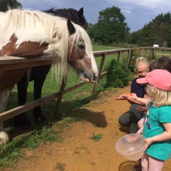 A Visit To The Horses At Little Owls Scarning (4)