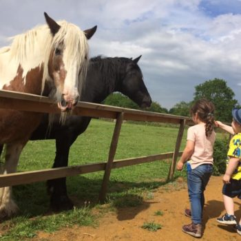 A Visit To The Horses At Little Owls Scarning (5)