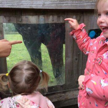 Feeding The Horses At Little Owls Near Kings Lynn Norfolk (1)