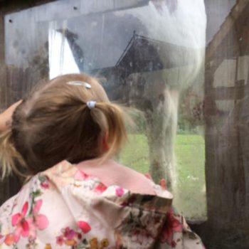 Feeding The Horses At Little Owls Near Kings Lynn Norfolk (2)