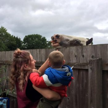 Feeding The Horses At Little Owls Near Kings Lynn Norfolk (3)