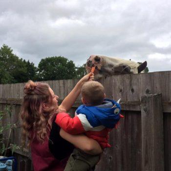 Feeding The Horses At Little Owls Near Kings Lynn Norfolk (4)