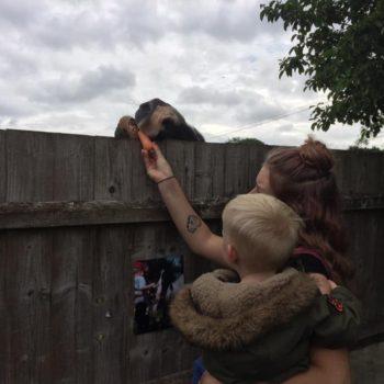 Feeding The Horses At Little Owls Near Kings Lynn Norfolk (6)