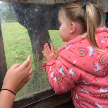 Feeding The Horses At Little Owls Near Kings Lynn Norfolk (8)