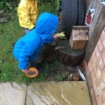 Bug Hunting At Little Owls Toftwood Norfolk (5)