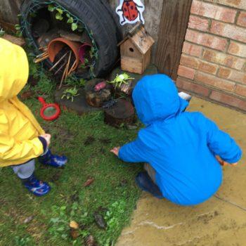 Bug Hunting At Little Owls Toftwood Norfolk (6)