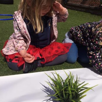 Exploring Nature At Little Owls Day Nursery Norfolk (1)