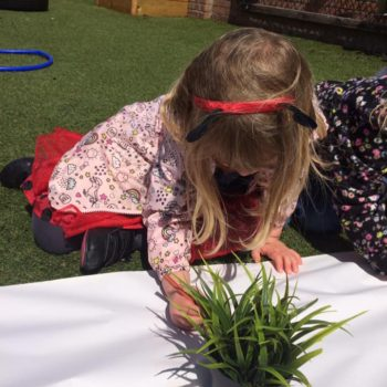 Exploring Nature At Little Owls Day Nursery Norfolk (4)