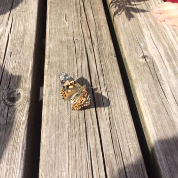 Butterfly Release Day At Little Owls Day Nursery (3)