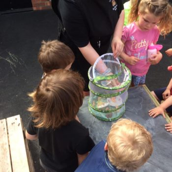 Butterfly Release Day At Little Owls Day Nursery (6)