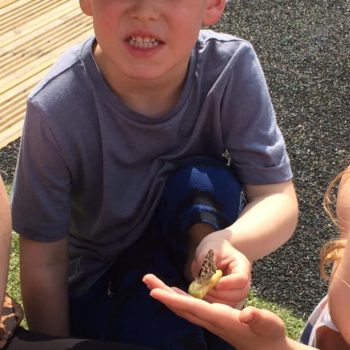 Setting Our Butterflies Free At Little Owls (4)