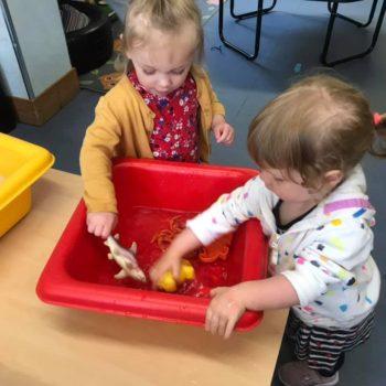 Sea Life At Little Owls Childrens Nursery Near Norwich (2)