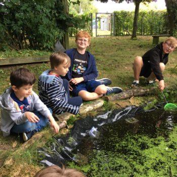 Pond Life At Hoots Holiday Club (10)