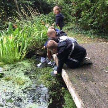 Pond Life At Hoots Holiday Club (6)