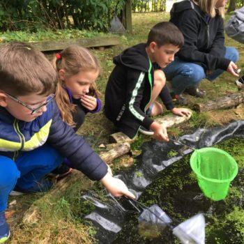 Pond Life At Hoots Holiday Club (9)